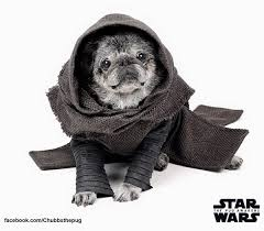 affenpinscher star wars this adorable pug is a huge star wars fan american kennel club