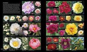 flower encyclopedia royal horticultural society encyclopedia of plants flowers