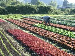 aggregator backyard farmer canada
