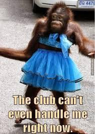 Sexy Monkey Meme - party tonight shaving optional http memebinge com sexy monkey