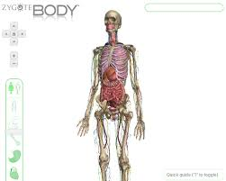 Google Body Anatomy Google Open Sources 3d Body Web App