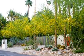 corners u0026 edges 3 palm springs planting steve martino