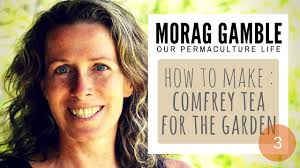how make self watering pots morag gamble our permaculture how make comfrey tea morag gamble our permaculture life