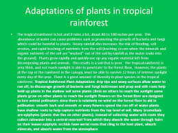Adaptations Of Tropical Rainforest Plants - the rainforest the biome of showers of happiness ppt video