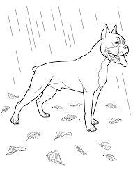 dog coloring pages 30 teenagers coloring pages favorite dog