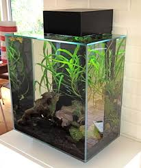 Fluval Edge Aquascape Customer Image Gallery For Fluval Edge 12 Gallon Aquarium With 42