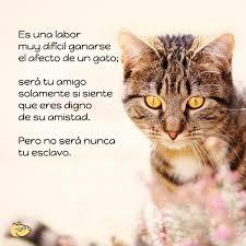 imagenes de gatitos sin frases img frases de gatos 21209 paso 4 600 jpg