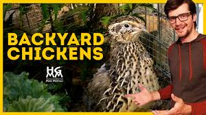 tips on backyard chickens quail and other fowl play youtube