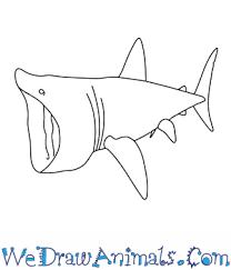 coloring glamorous easy shark drawings bull thumb coloring