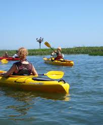 Delaware wildlife tours images Burton 39 s island wildlife tour coastal kayak fenwick de jpg