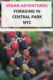 vegan adventures central park travel usa and travel pro