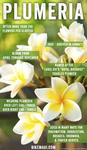 Fragrant Tropical Plants - best 25 hawaii flowers ideas on pinterest hibiscus hawaii surf