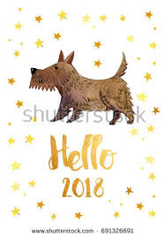 scottish terrier stock images royalty free images