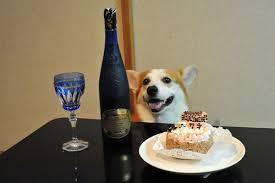Corgi Birthday Meme - birthday corgi is celebrating his birthday rebrn com