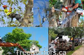 tree doctors tree care and removal services in toronto