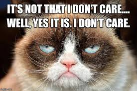 Grumpy Cat Yes Meme - grumpy cat not amused memes imgflip
