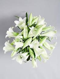 Lily Plant Lilies White Lilies Flowers Lily Bouquets U0026 Plants M U0026s