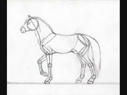 horse anatomy drawing youtube