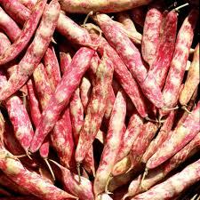 cuisiner les haricots blancs frais en septembre c est l abondance faites des réserves nourrir sa