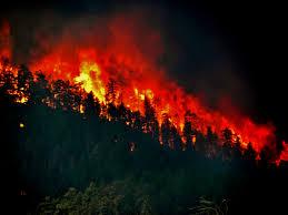 Wildfire Scientific Definition by Wild Firesalthough