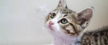 kitten adoption san diego u2013 adopt a kitten helen woodward animal