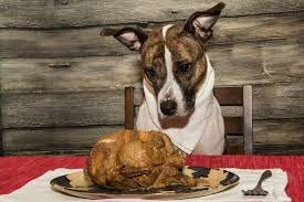 12 tips to keep your pet safe this thanksgiving