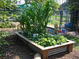 tier gardening design vegetables including corn thrive in this