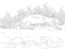 northern river otter coloring free printable coloring pages