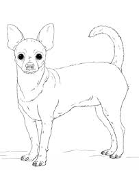 chihuahua dog coloring free printable coloring pages