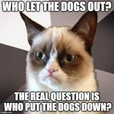Who Let The Dogs Out Meme - who let the dogs out the real question is who put the dogs down