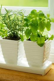 Window Sill Herb Garden by 78 Best Herbs To Know Images On Pinterest Herb Garden Healing