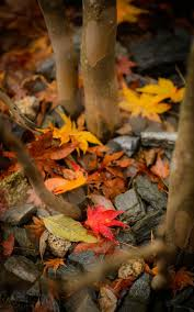 halloween autumn background 370 best autumn leaves images on pinterest autumn fall fall and