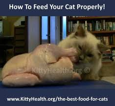 raw food for cats ideas raw cat food diet my ragdoll cats are fed