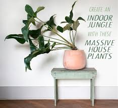 Indoor Tropical Plants For Sale - create an indoor jungle with these large indoor plants pistils
