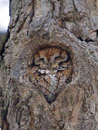 owl in tree birbs your meme