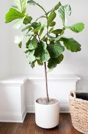 indoor plants home decor ideas planters hanging clean air u2013 modern