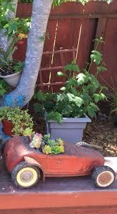 15 best my succulent plants and arrangements images on pinterest
