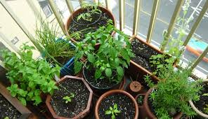 Herb Container Garden - 5 herbs perfect for container gardening hobby farms