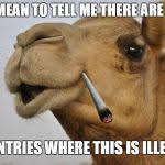 Camel Meme - truth camel blank template imgflip