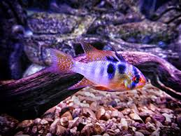 freshwater fish tropical fish clark u0027s pet emporiumclark u0027s pet emporium