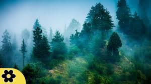 Calming Blue by 3 Hour Zen Meditation Music Nature Sounds Relaxing Music