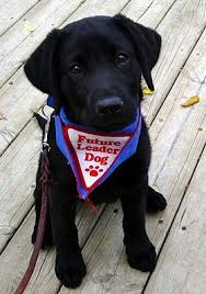 Leader Dogs For The Blind Jobs Thank You Puppy Raisers Leader Dogs For The Blind Pinterest Dog