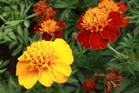 flowers pictures free photographs photos public domain