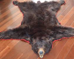 Taxidermy Bear Rug Lot Detail Authentic Vintage Black Bear Skin Rug