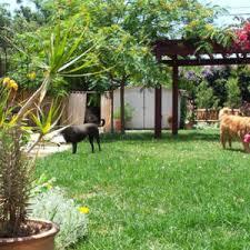 Garden Ideas For Dogs Garden Ideas For Dogs Photogiraffe Me
