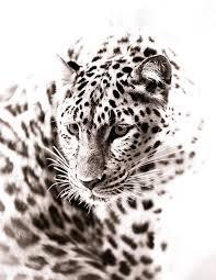 wildlife home decor leopard art monochrome animal artwork wildlife home decor