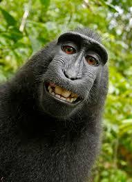 monkey selfie copyright dispute wikipedia produce clerk resume sles visualcv resume sles database