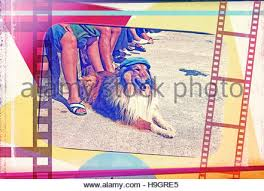 afghan hound vintage afghan hound with cap on vintage retro dog summer holiday photo