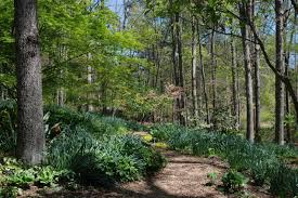 Botanical Gardens South Carolina The South Carolina Botanical Garden In Clemson Sc