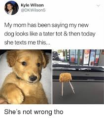 Dog Mom Meme - kyle wilson my mom has been saying my new dog looks like a tater